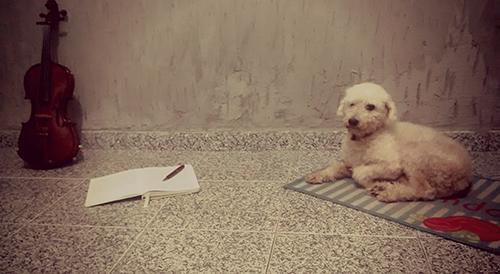 Um violino, um cachorro e um diário