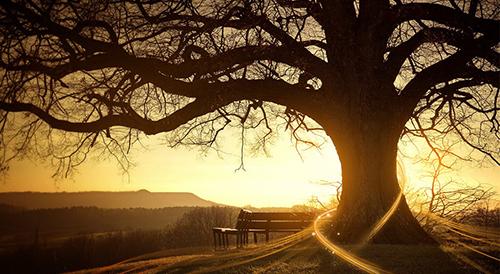 A Árvore e o Tempo